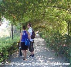 Ivy tunnel in Bardini Garden in summer