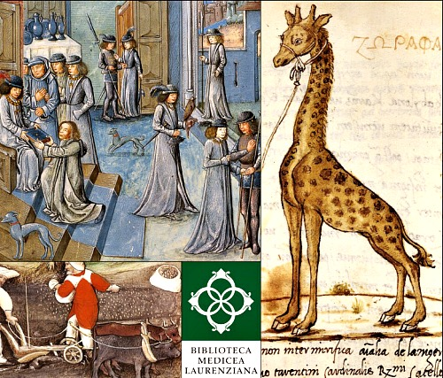 Animalia, an exhibit on historic documentation of animals in ancient manuscripts, is on at the Laurentian Library
