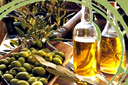 Olives are picked and the fresh olive oil comes out for all to enjoy in November in Florence