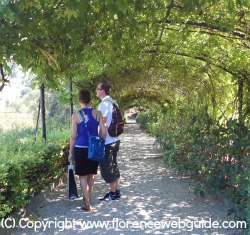 Ivy tunnel in Bardini Garden in summer
