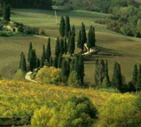 Things to do in Florence - the Tuscan countryside